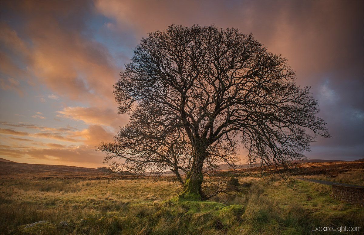I love shooting tree's in winter. you can see the full shape and design. Captured in the Wicklow mountains..